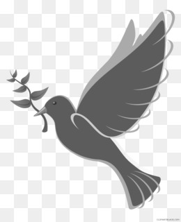 Free download Pigeons and doves Clip art Free content Domestic.