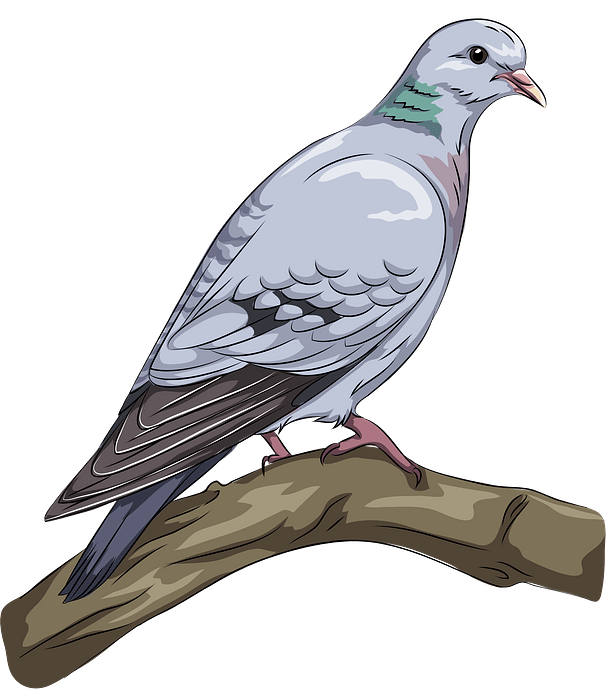 Stock Dove clipart. Free download..