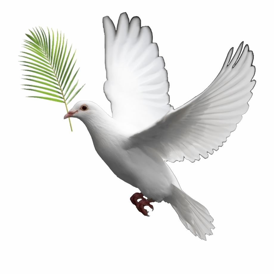 Peace Dove Clipart Biblical Whatsapp.