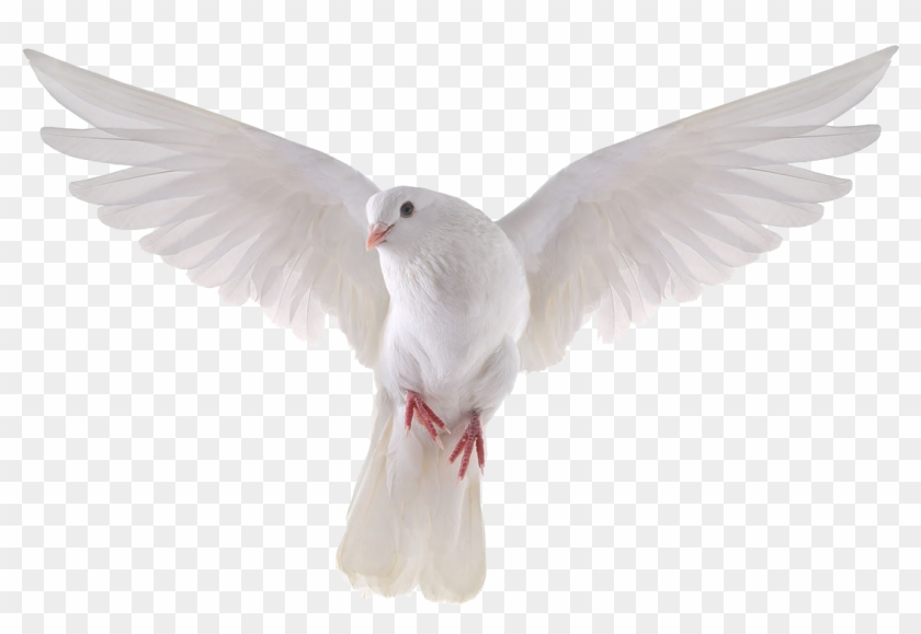 Pigeon Png Clipart.