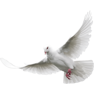Flying Dove transparent PNG.