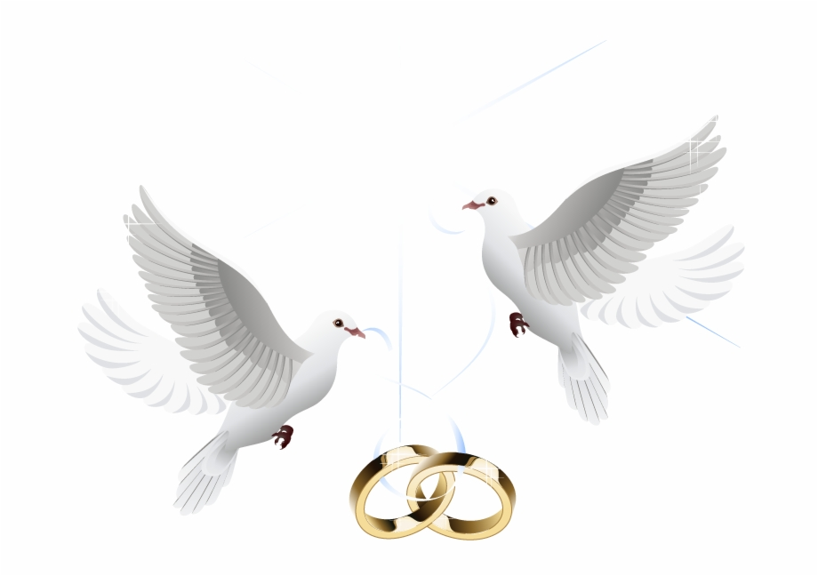 Ring Vector Marriage Wedding Download Hd Png Clipart.
