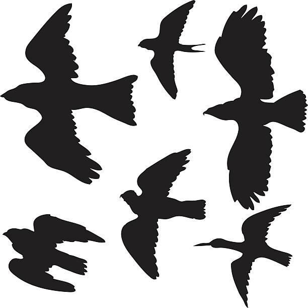 Best Dove Hunt Illustrations, Royalty.