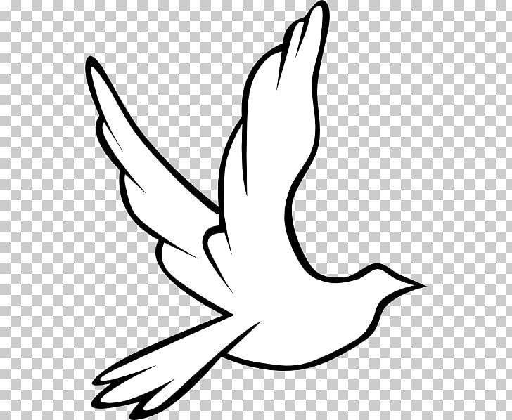 Columbidae Holy Spirit Doves as symbols , Wedding Dove.