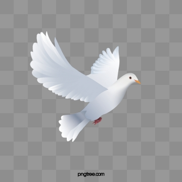 Dove Png, Vector, PSD, and Clipart With Transparent Background for.