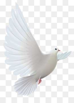Dove PNG.