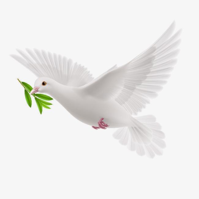 Dove PNG Transparent Dove.PNG Images..