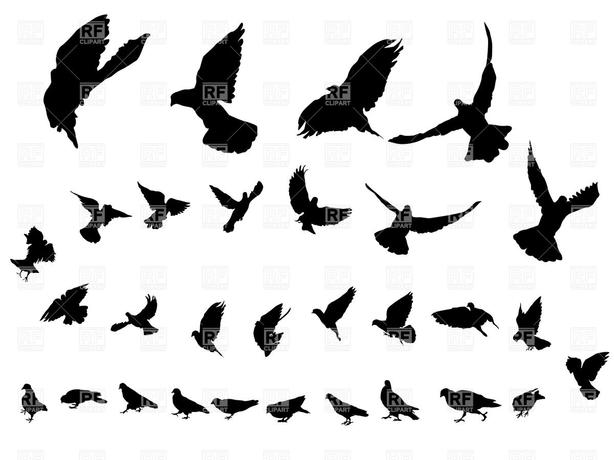 Flying dove silhouettes Stock Vector Image.