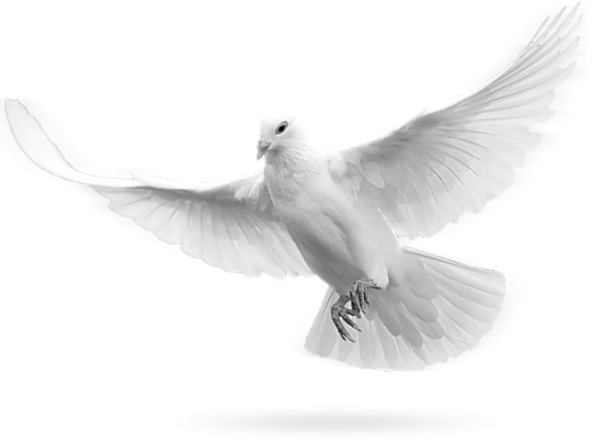 Simple Dove Png Pictures #41761.