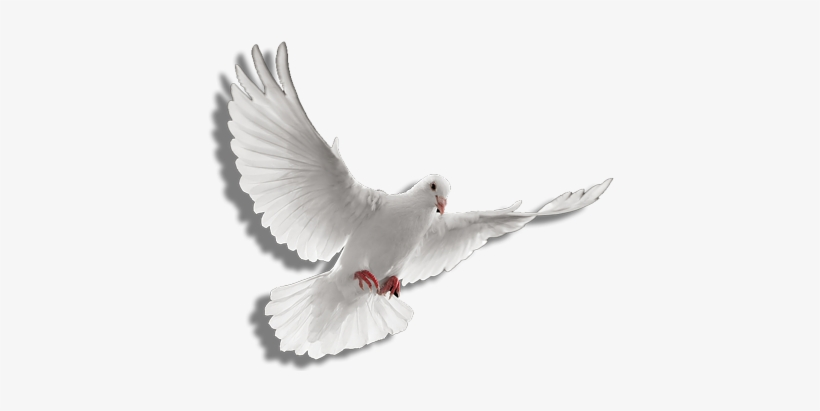 Holy Spirit Dove Png Clip Art Transparent Stock.