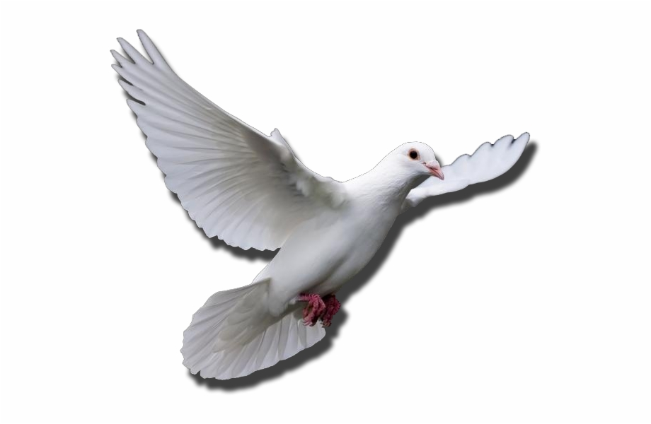 Funeral Doves Png.