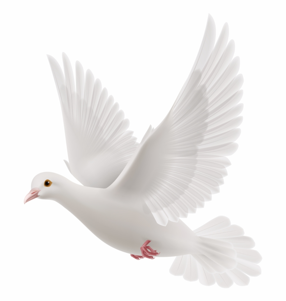 Pigeon Png, Download Png Image With Transparent Background.