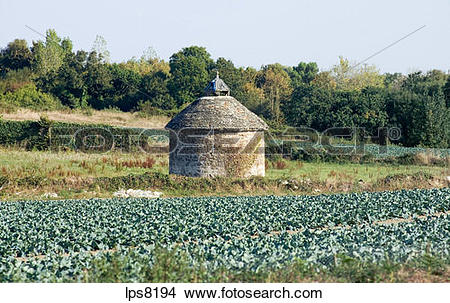Stock Photo of cabbage cultivation field and dovecot brittany.