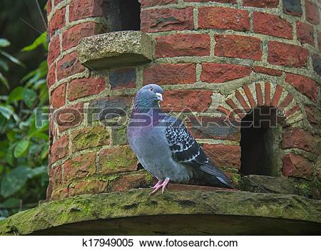 Stock Image of Pigeon on Dovecote k17949005.