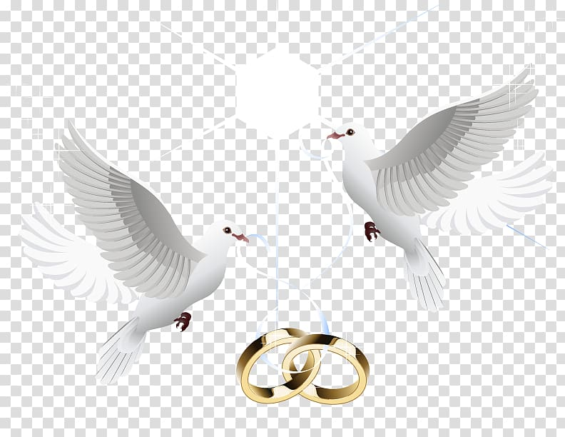 Wedding ring Marriage Wedding ring, wedding ring, two doves.
