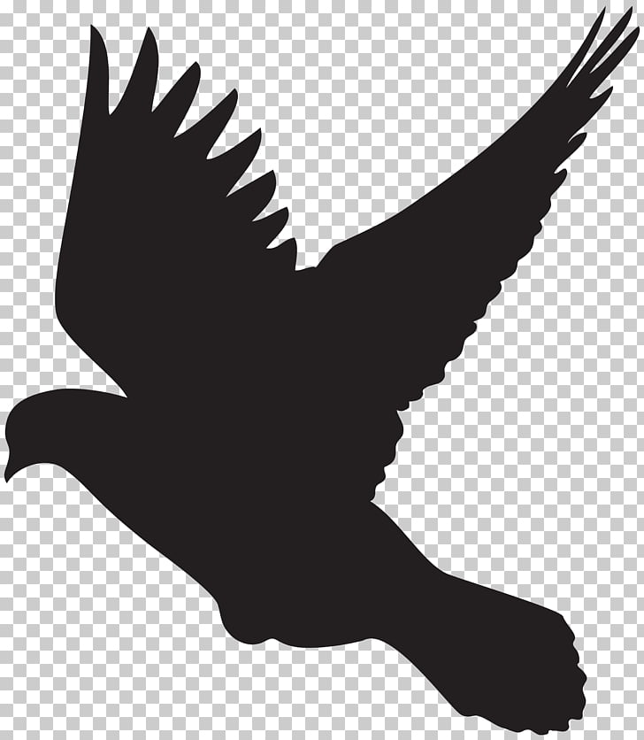 Columbidae Silhouette Drawing Dove , DOVES PNG clipart.