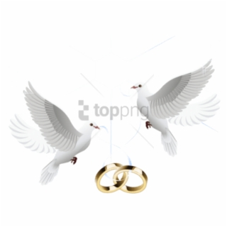 Wedding Doves PNG Images.