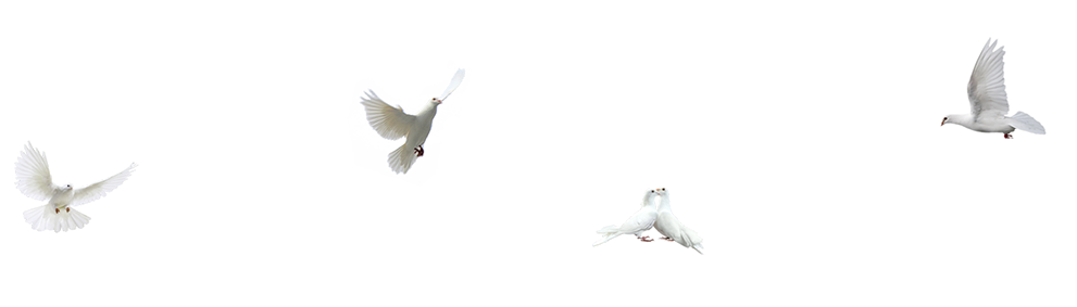 Bird,White,Beak,Wing,Pigeons and doves,Feather,Seabird,Flight,Rock.