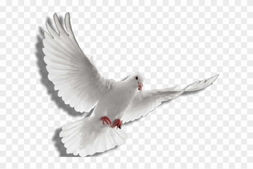 White Dove Clipart Fire Png.