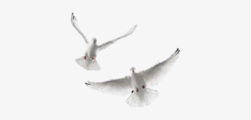Doves Flying Away Png.