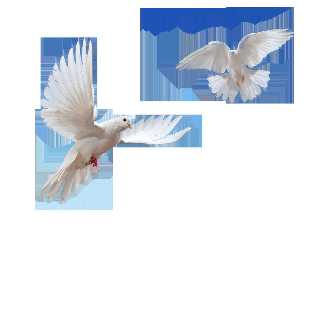 Doves flying in sky png #41759.