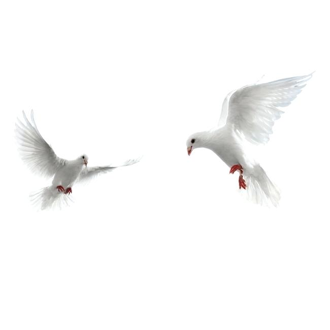 doves png.