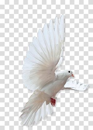 Flying doves illustration, Rock dove Bird Columbidae Flock, bird.