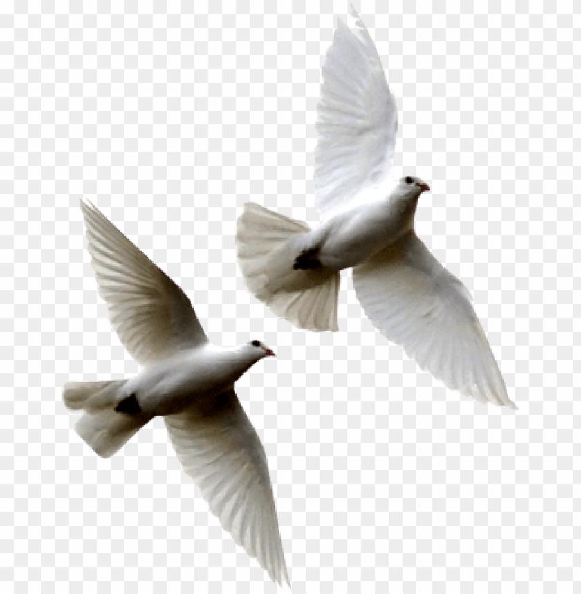 white birds flying png white.