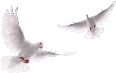 Flock Of Doves Png Vector, Clipart, PSD.