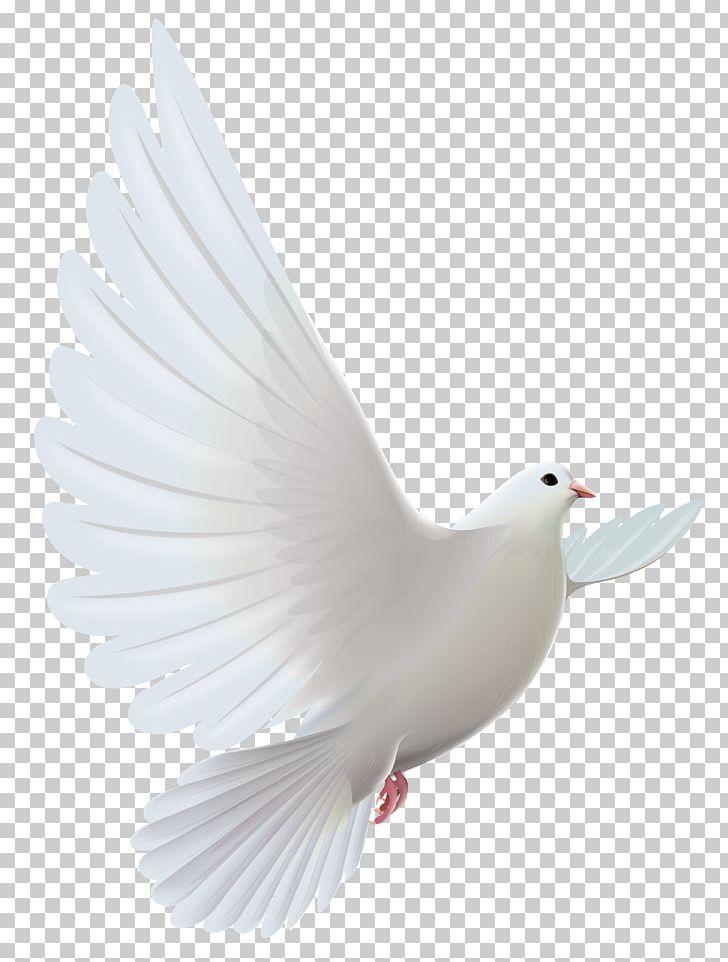 Pigeons And Doves Bird Prayer PNG, Clipart, Art White, Beak, Bird.