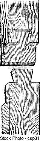 Vectors Illustration of Dovetail, vintage engraving..