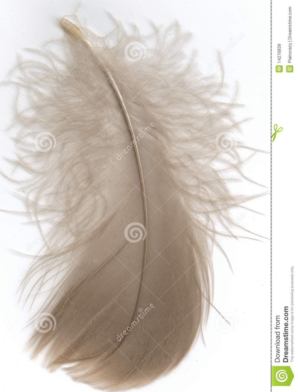 Goose Down Feather Royalty Free Stock Images.