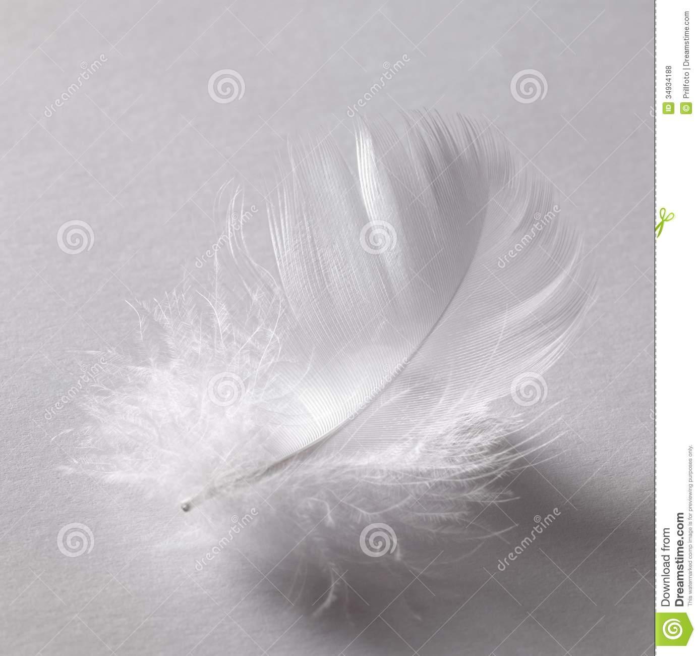 Snow Bird Pink Grey Clipart.