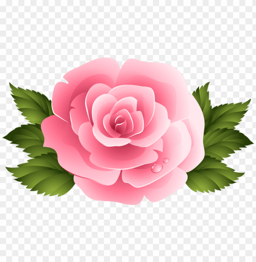 Download pink rose clipart png images background.