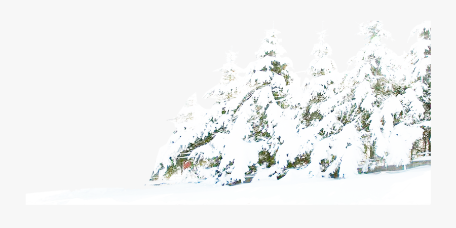 Tree Winter Pine Snow Free Download Png Hd Clipart.