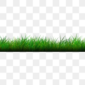 Grass PNG Images, Download 16,101 Grass PNG Resources with.