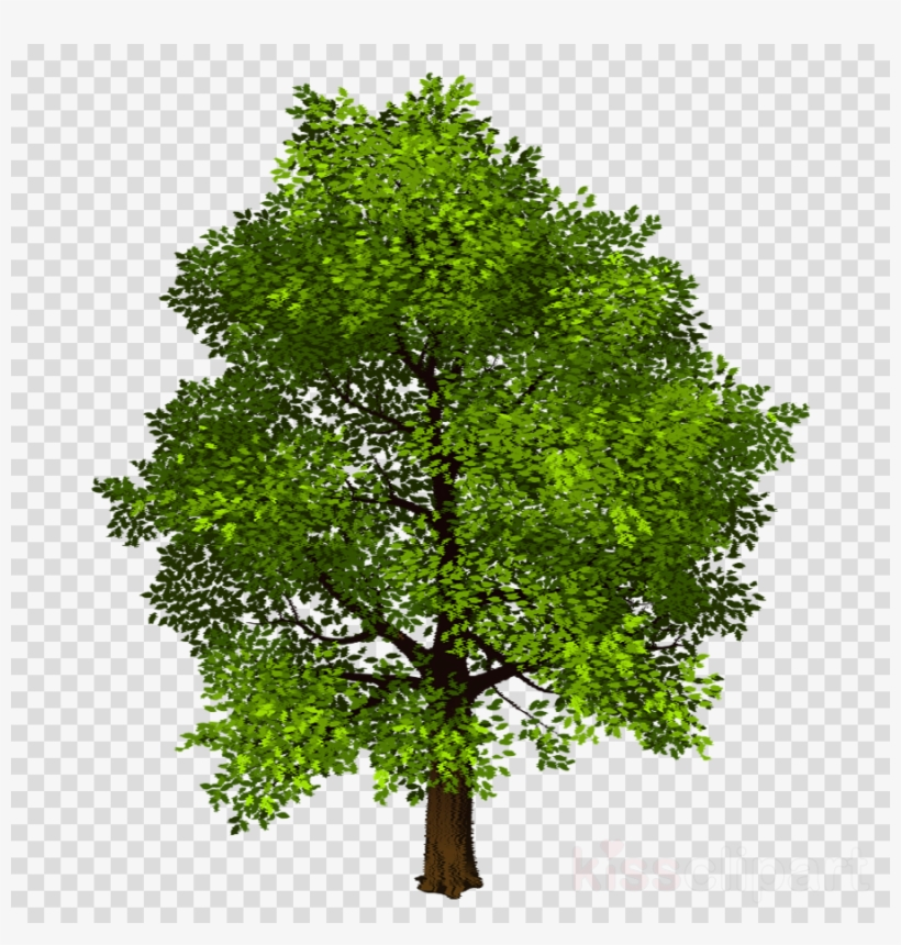 Download Free png Download Transparent Background Photo Shop Trees.