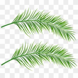 Leaf PNG Images, Free Transparent Image Download.