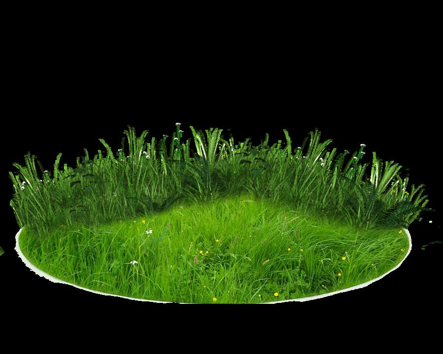 Download Nature Transparent Background.