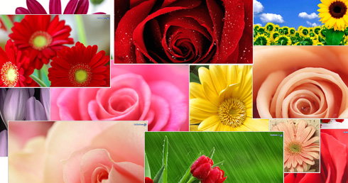 Free Downloadable Pictures Of Flowers.