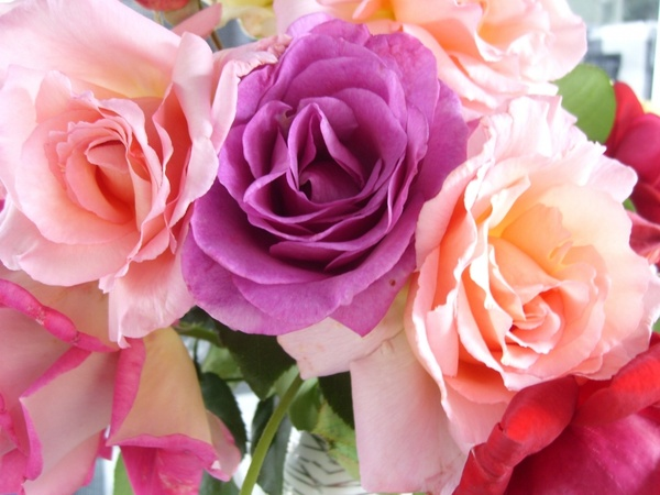 Rose flowers free stock photos download (11,703 Free stock photos.