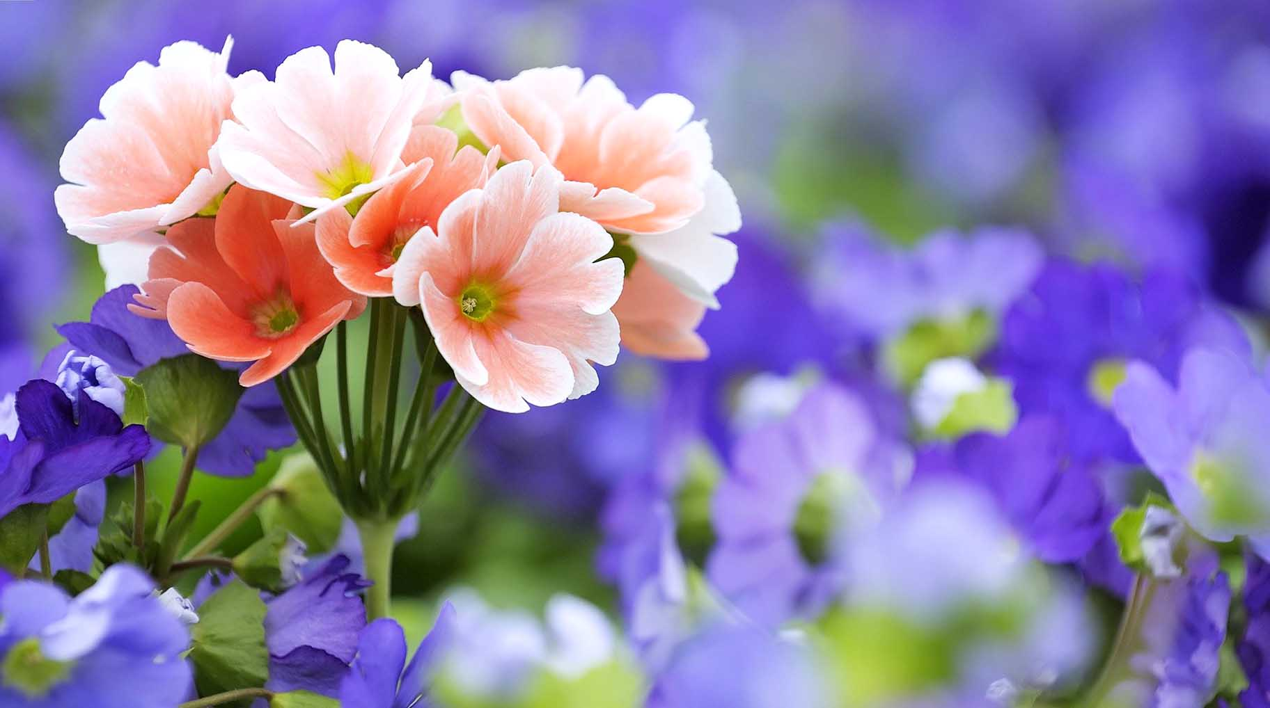 Downloadable Pictures Of Flowers.