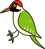 Woodpecker Illustrations and Clipart. 110 woodpecker royalty free.