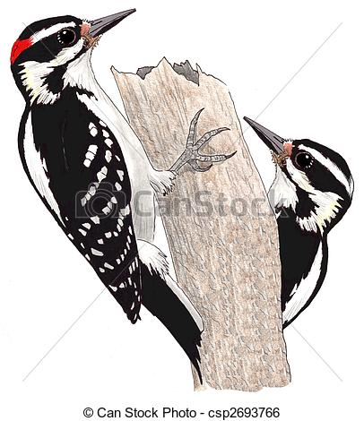 Woodpecker Stock Illustrations. 577 Woodpecker clip art images and.