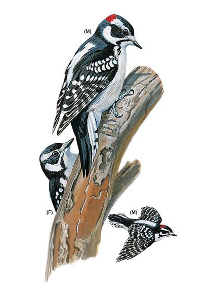 Bugs in a tree clipart woodpecker.