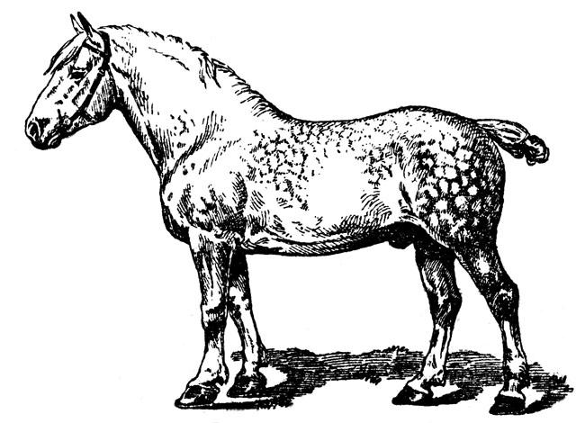 Work horse clipart.