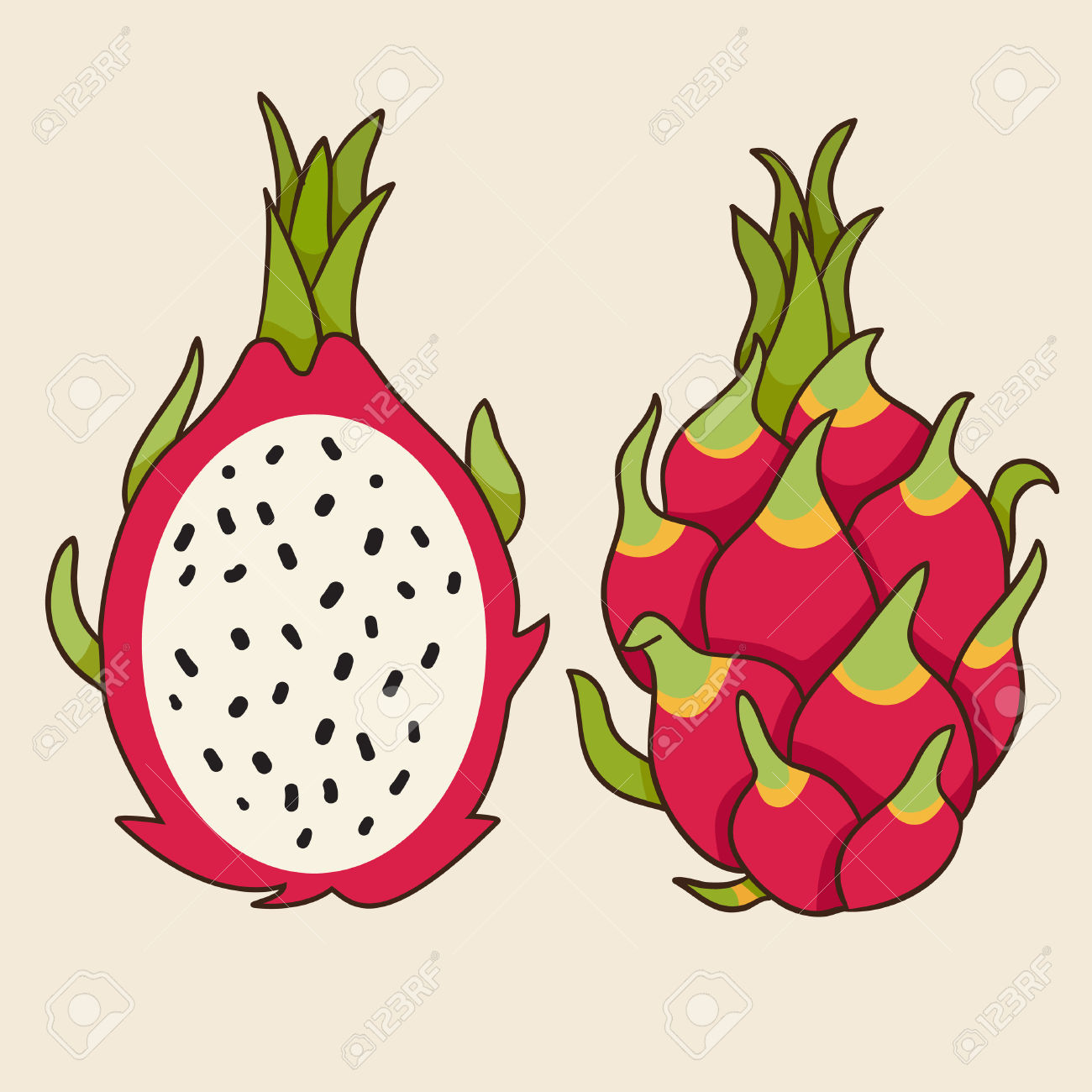 Dragon Fruit, Vector Illustration. Exotic Fruit. Hand.