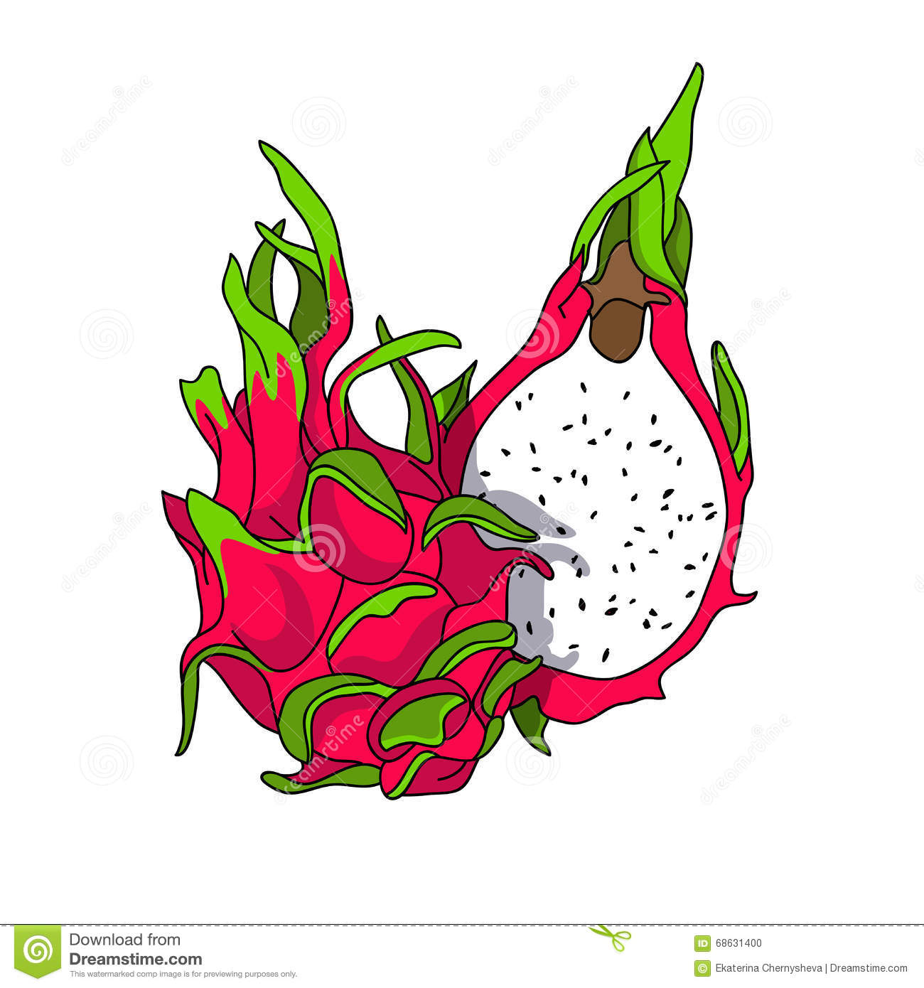 Exotic And Sweet Dragon Fruit Stock Vector.