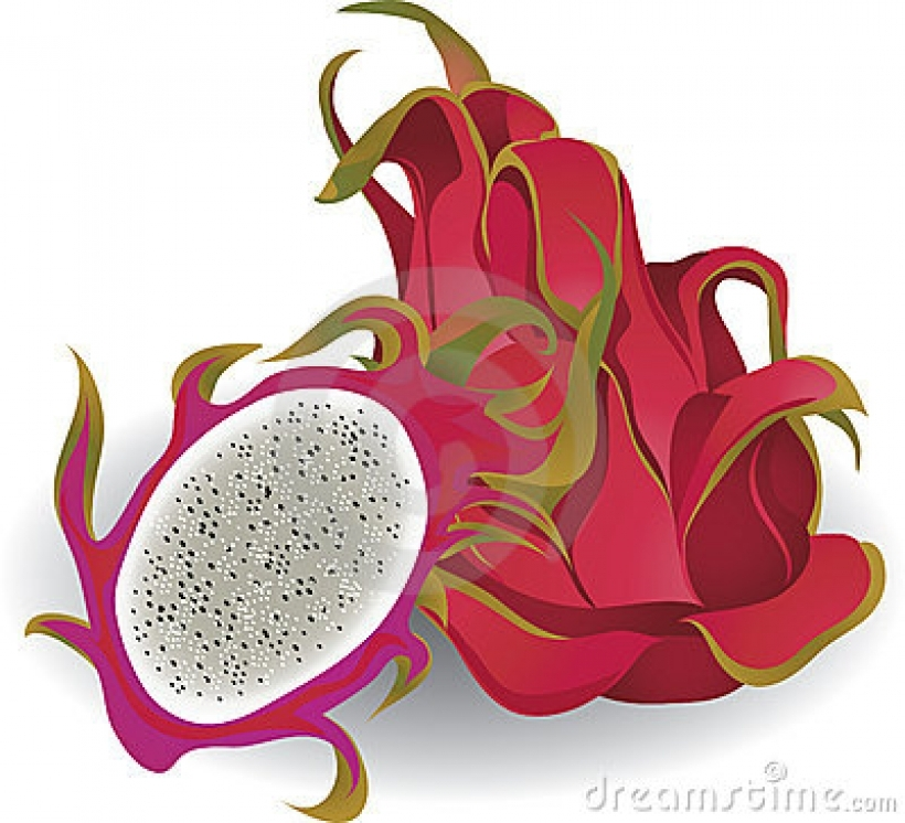 red dragon fruit stock illustrations vectors amp clipart 100.