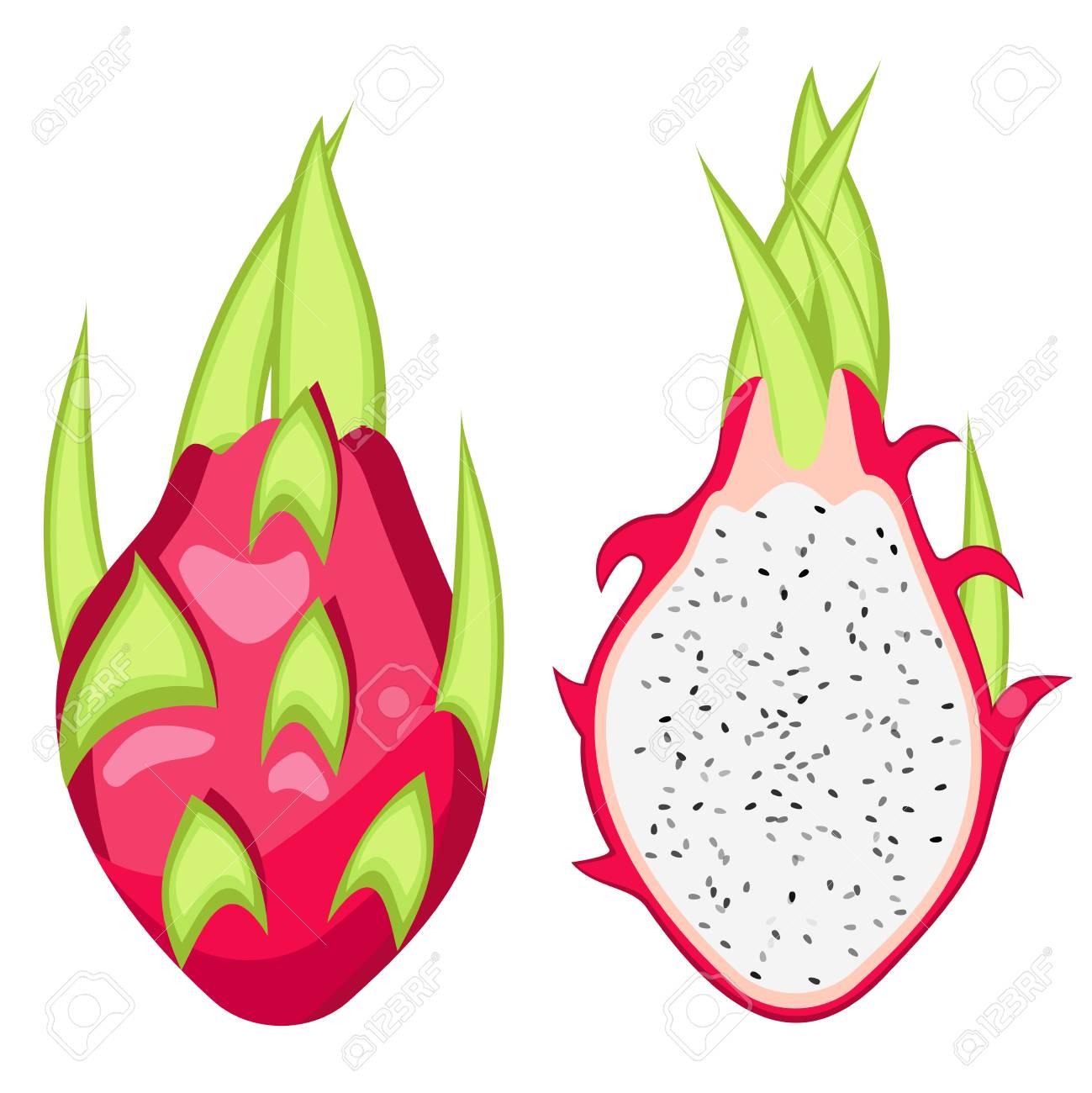 Pitahaya, Dragon fruit vector Illustration..